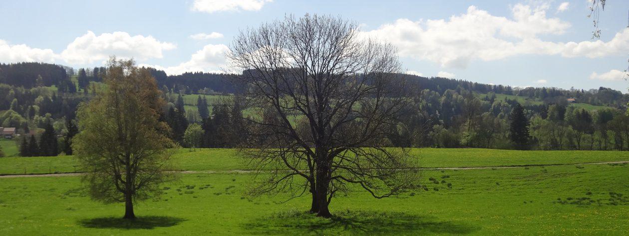 ARCHE ALLGÄU – Der KultURhof